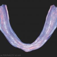 2d. Empreinte de la surface d'appui mandibulaire.