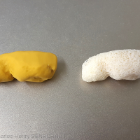 Fig. 13 : Greffon osseux et greffon en silicone