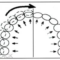 1 - Développement du maxillaire sous l'action de la mastication